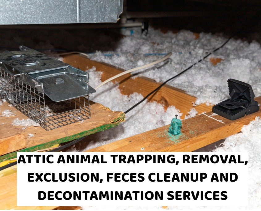 Animal Trapping, Attic Animal Removal, Wildlife Exclusion, Feces Removal, Attic Cleanup And Attic Decontamination Services In Ohio