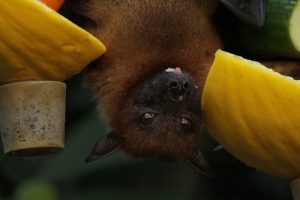 Bat And Guano Removal Services For Ohio Homeowners And Businesses