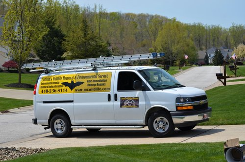CRW BAT REMOVAL TRUCK IN THE DRIVEWAY OF A CINCINNATI HOME - Pest control companies in Ohio that specialize in bat removal, bat control and bat exclusion always arrive at a customer's location properly equipped for the job. The Cottom's Wildlife Removal truck pictured here arrived fully loaded with ladders, one way doors, heavy leather gloves, silicone caulking, coveralls, caulking guns, wire mesh, hardware cloth, exclusion devices, enzyme odor removers, hard hats, Tyvek suits, boots, goggles, catching nets, mist nets, telescoping cage nets and other personal protective equipment (PPE).