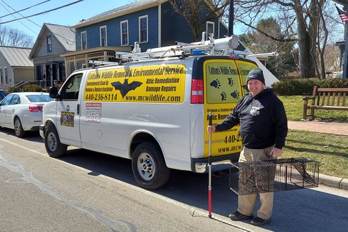 Pictured Here Is Mike Cottom Sr. On A Wildlife Removal Service Call In Northern Ohio