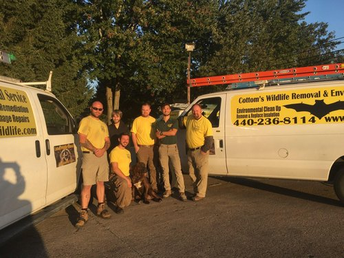 Pictured here are 6 of the humane wildlife removal experts at the Cottom's Wildlife Removal company in Columbus Ohio. CWR offers professional wildlife removal, local wildlife removal, wild animal removal services and wildlife pest control to families and business owners that live and work near Columbus, Zanesville, Marion, Upper Arlington, Dublin Grove City, Newark, Marysville, Lancaster, Circleville, Kenton and Plain City, Ohio.