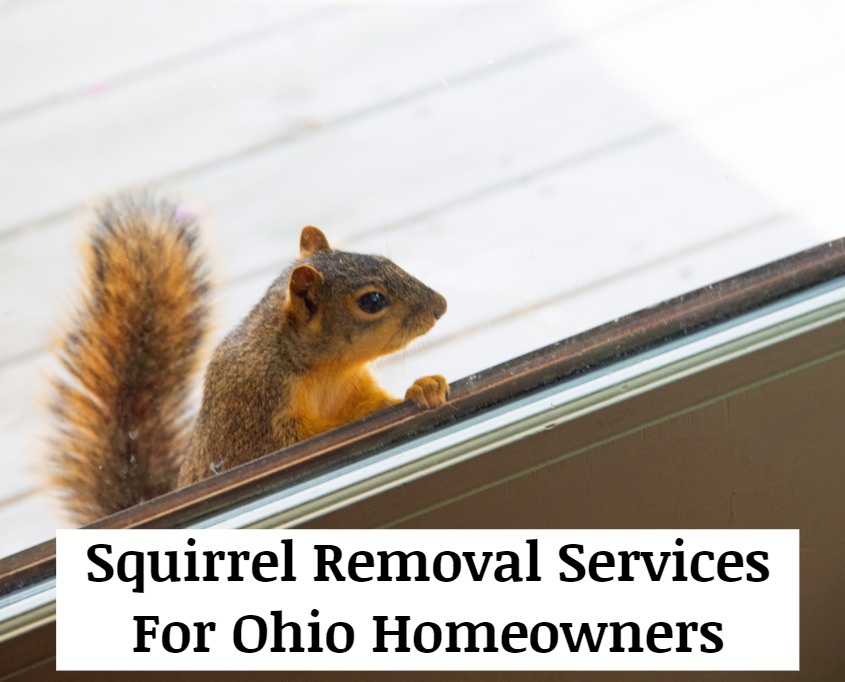 For Squirrel Removal Services, Squirrel Repair Services, Squirrel Control Services Near You And Costs In Columbus, Cleveland, Cincinnati, Toledo, Dayton, Youngstown, Springfield and Zanesville, Ohio Call 440-236-8114 To Request An Inspection And A Written Price Quote For Squirrel Trapping, Squirrel Exclusion And Squirrel Cleanup Services