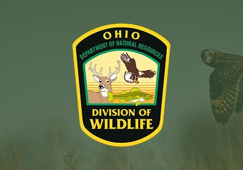OHIO DIVISION OF WILDLIFE - If a bat continues to stay in your home, the Ohio Division of Wildlife recommends that you call a professional bat control service such as the Cottom's Wildlife Removal company (440-236-8114) to have it removed.