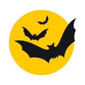 How To Catch A Bat | Do-It-Yourself Bat Removal | Bat Protection Laws In Ohio | When You Can Permanently Get Rid Of Bats Youself By Using Exclusion Products In Ohio | Costs To Hire A Professional Bat Removal Company In Ohio