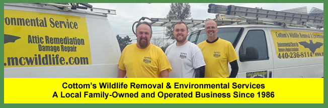 Cottom's Wildlife Removal & Environmental Service – A Local Wildlife Removal, Pest Control, Humane Wild Animal Removal, Nuisance Animal Trapping, Bird Removal And Bat Exclusion Company Serving Homeowners And Businesses In Cleveland, Cincinnati, Toledo And Columbus, Ohio Since 1986 – Hire A Local, Experienced And Reliable Nuisance Animal Control Contractor