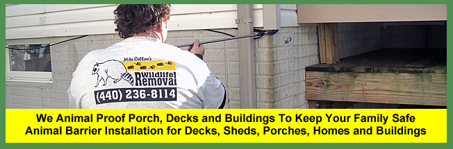 We Animal Proof Decks, Sheds and Porches To Exclude Wildlife From Nesting In and Under Human Property