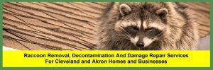 Animal and Wildlife Removal Services for Homeowners and Businesses in Cleveland and Akron, Ohio