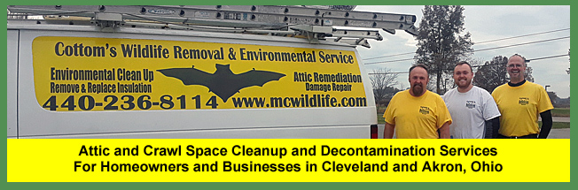 PROFESSIONAL ATTIC CLEANING, RESTORATION, DECONTAMINATION AND ODOR REMOVAL SERVICES IN OHIO - June 16, 2021 - Attic Cleaning, Restoration, Decontamination, Sanitizing, Odor Removal And Insulation Replacement Services For Ohio Homeowners That Live In, And Near, Columbus, Cincinnati And Cleveland | Schedule An Attic Inspection | From $239+ | Call 440-236-8114 In Cleveland 440-236-8114, 614-300-2763 in Columbus Or 513-808-9530 In Cincinnati 513-808-9530 | CWR Decontamination Technicians Restore Attics in Canton, Toledo, Dayton, Chillicothe, Youngstown, Marietta, Canton And Akron | CWR Removes And Excludes Raccoons, Squirrels, Mice, Rodents, Birds And Bats From Attics, Roofs, Vents And Chimneys