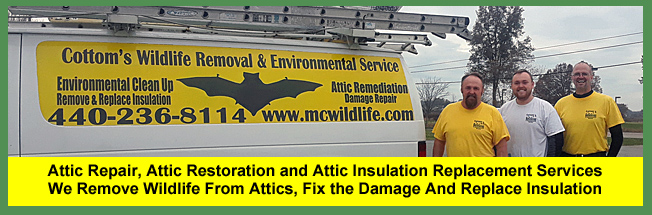 Attic Repair, Attic Restoration, Attic Decontamination and Attic Insulation Repair Services for Homeowners in Cleveland and Akron.