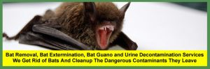 Bat Removal Services, Bat Control Services, Bat Guano and Bat Urine Decontamination Services for Homeowners and Businesses in Cleveland Columbus, Cincinnati And Akron Ohio.