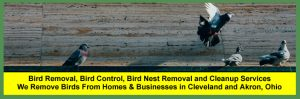 Bird Removal, Bird Control, Bird Nest Removal and Bird Waste Contamination Services for Cleveland and Akron Ohio Homeowners and Businesses