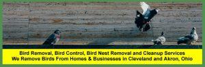 Bird Removal Services In Cleveland, Columbus And Cincinnati Ohio