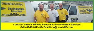 Call the Cottom's Wildlife Removal company at 440-236-8114 in Cleveland, 614-300-2763 in Columbus or 513-808-9530 in Cincinnati.