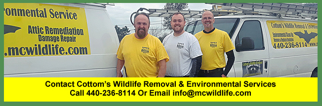 Contact Cottom's Wildlife Removal and Environmental Services, A Family Operated Business in Cleveland, Ohio