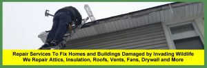Wildlife Damage Repair Services For Cleveland, Columbus, Cincinnati & Akron Ohio Homeowners & Businesses | After wildlife, critters, animals, raccoons, birds or bats have been removed, damage management and repair services are provided for Ohio homeowners.
