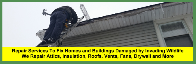 Wildlife Damage Repair Services For Cleveland, Columbus, Cincinnati & Akron Ohio Homeowners & Businesses   After wildlife, critters, animals, raccoons, birds or bats have been removed, damage management and repair services are provided for Ohio homeowners.