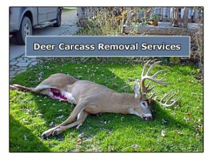Deer And Animal Carcass Removal For Cleveland Akron
