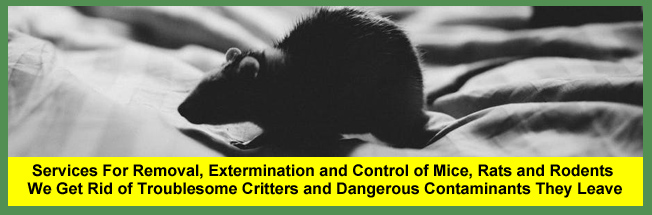 Mice, Rat and Rodent Removal and Extermination Services For Homeowners and Businesses in Cleveland and Akron