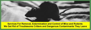 Mouse Extermination Services For Cleveland and Akron Families