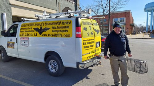 Pictured here is Mike Cottom Sr., who founded the Cottom's Wildlife Removal company in Ohio in 1986. He is posing in front of one of the CWR pest control trucks in Upper Arlington, Ohio. He is holding a professional animal trap used to catch groundhogs. The steel mechanical live cage trap is non-lethal (humane) and features double doors.