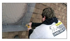 Preventing Raccoons From Entering Roof Fan and Vent - Raccoon Exclusion Services