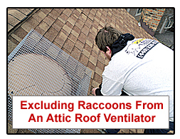 Excluding Raccoons From An Attic Roof Vent and Fan