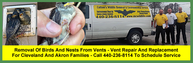 Removal Of Birds From Vents For Cleveland And Akron Families - Vent Repair and Replacement Services