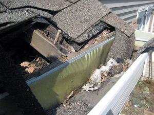 Damage To Roof And Gutter Caused By Wildlife - Specifically A Raccoon