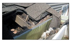 Roof And Gutter Damage Caused By A Raccoon