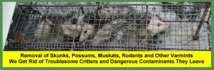 Skunk, Possum, Muskrat, Rodent, Varmint Removal Services For Homeowners and Businesses in Cleveland and Akron
