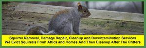 Squirrel Removal Near You In Cleveland, Columbus And Cincinnati Ohio