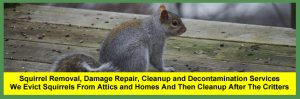 Columbus Squirrel Removal Company | $399+ 24/7 Repair & Cleanup