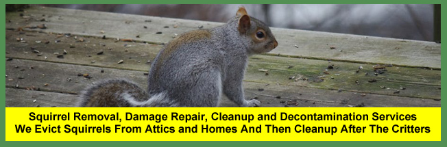 Columbus Squirrel Removal Company   $399+ 24/7 Repair & Cleanup
