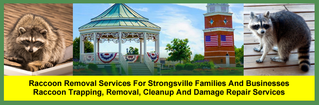 Raccoon Trapping and Removal Services For Families in Strongsville, Ohio