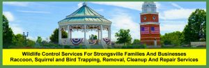Strongsville, Ohio Wildlife, Raccoon, Squirrel and Bird Control, Removal, Cleanup and Repair Services